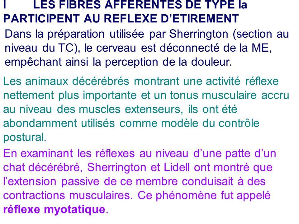 I LES FIBRES AFFERENTES DE TYPE Ia PARTICIPENT AU REFLEXE D'ETIREMENT