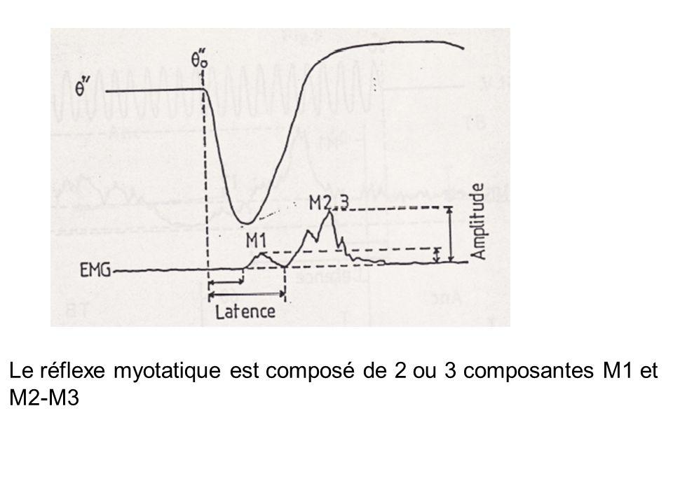 Le réflexe myotatique est composé de 2 ou 3 composantes M1 et M2-M3
