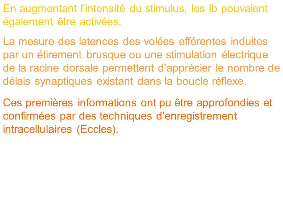 En augmentant l'intensité du stimulus, les Ib pouvaient également être activées.