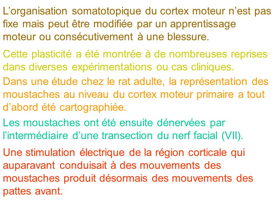 L'organisation somatotopique du cortex moteur n'est pas fixe mais peut être modifiée par un apprentissage moteur ou consécutivement à une blessure.