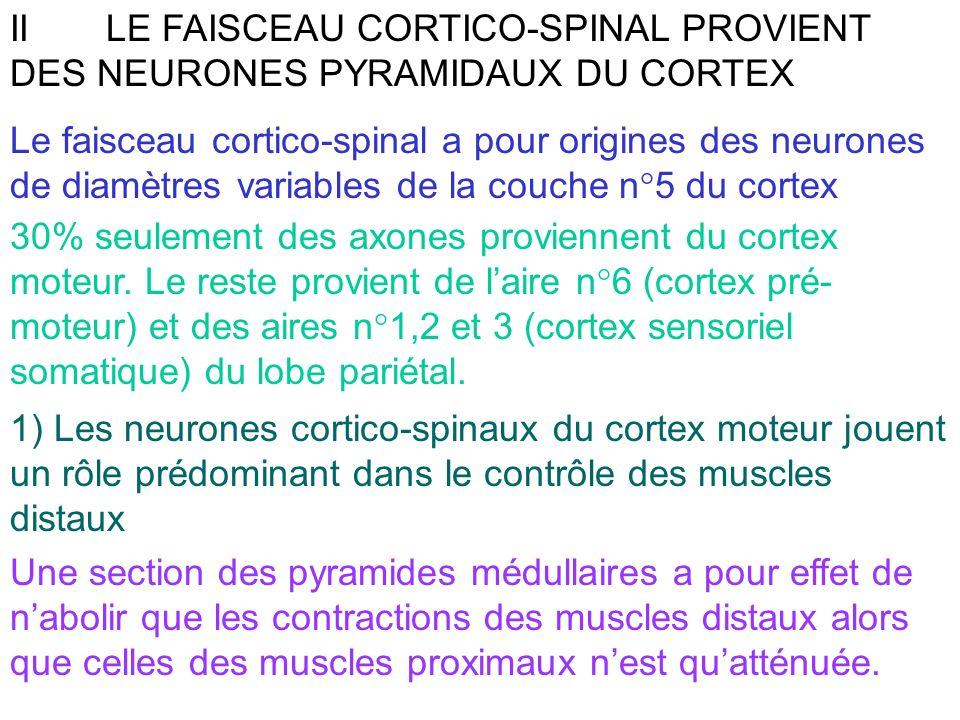 II LE FAISCEAU CORTICO-SPINAL PROVIENT DES NEURONES PYRAMIDAUX DU CORTEX