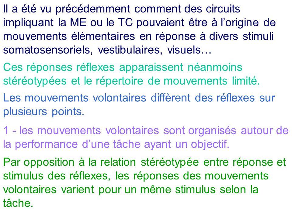 Il a été vu précédemment comment des circuits impliquant la ME ou le TC pouvaient être à l'origine de mouvements élémentaires en réponse à divers stimuli somatosensoriels, vestibulaires, visuels…