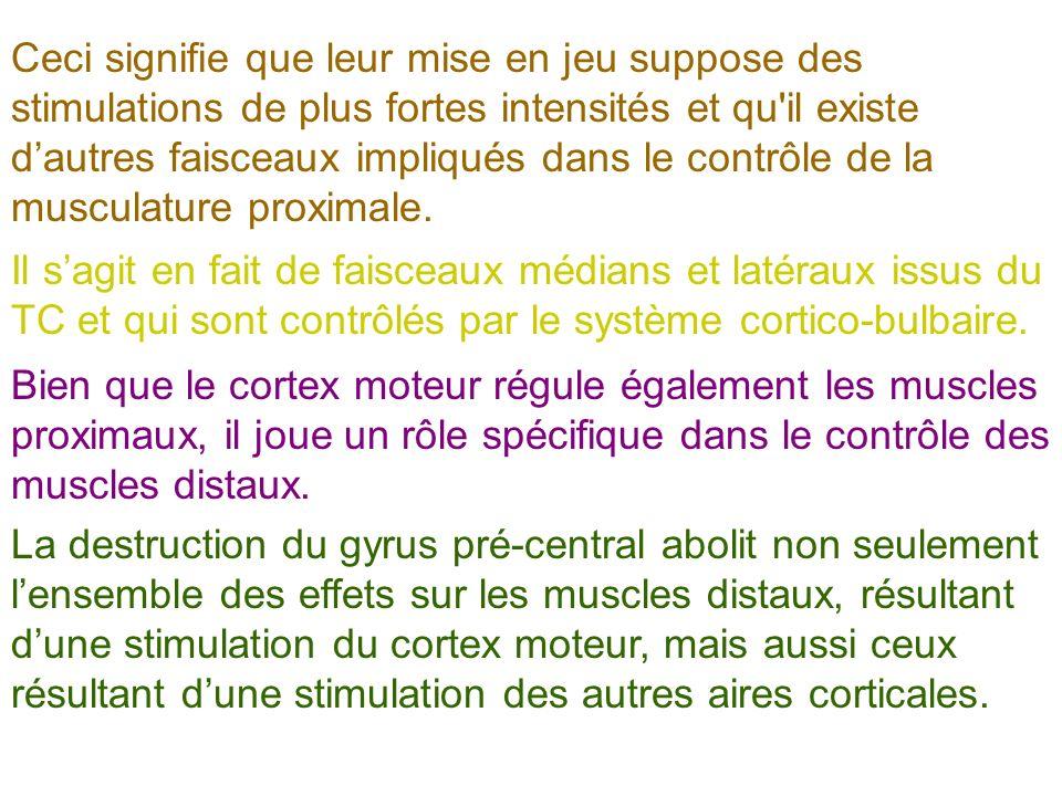 Ceci signifie que leur mise en jeu suppose des stimulations de plus fortes intensités et qu il existe d'autres faisceaux impliqués dans le contrôle de la musculature proximale.