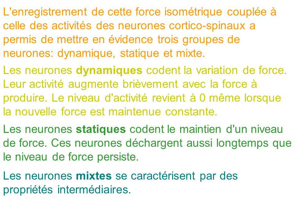 L enregistrement de cette force isométrique couplée à celle des activités des neurones cortico-spinaux a permis de mettre en évidence trois groupes de neurones: dynamique, statique et mixte.