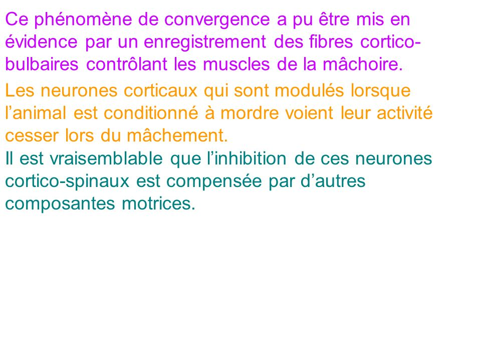 Ce phénomène de convergence a pu être mis en évidence par un enregistrement des fibres cortico-bulbaires contrôlant les muscles de la mâchoire.