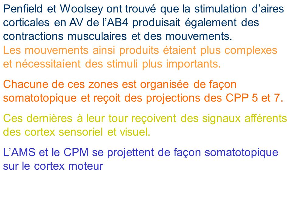 Penfield et Woolsey ont trouvé que la stimulation d'aires corticales en AV de l'AB4 produisait également des contractions musculaires et des mouvements.
