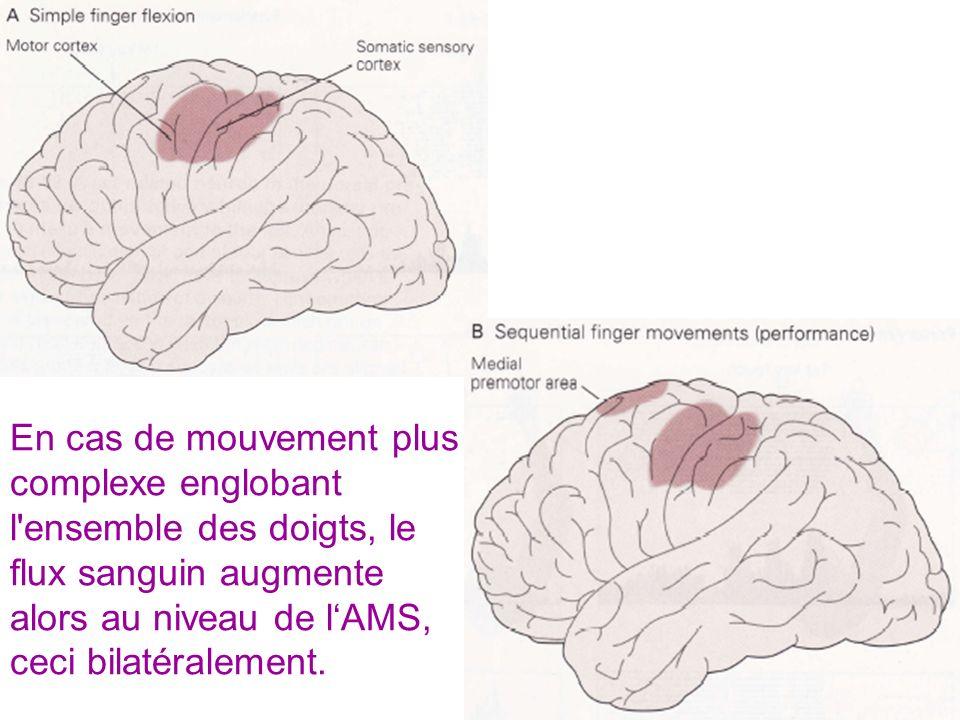 En cas de mouvement plus complexe englobant l ensemble des doigts, le flux sanguin augmente alors au niveau de l'AMS, ceci bilatéralement.