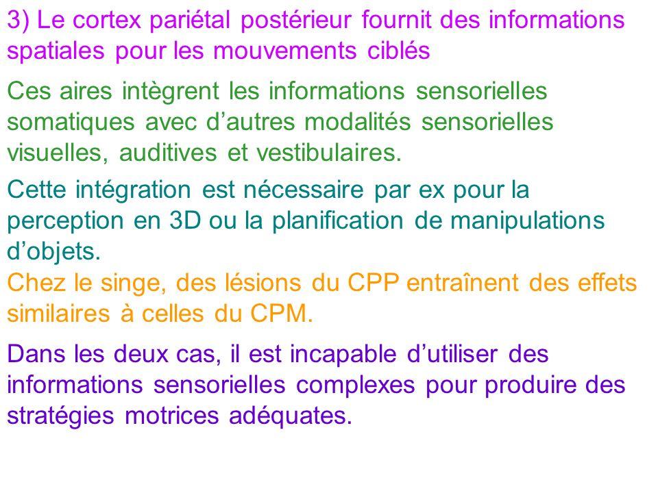 3) Le cortex pariétal postérieur fournit des informations spatiales pour les mouvements ciblés