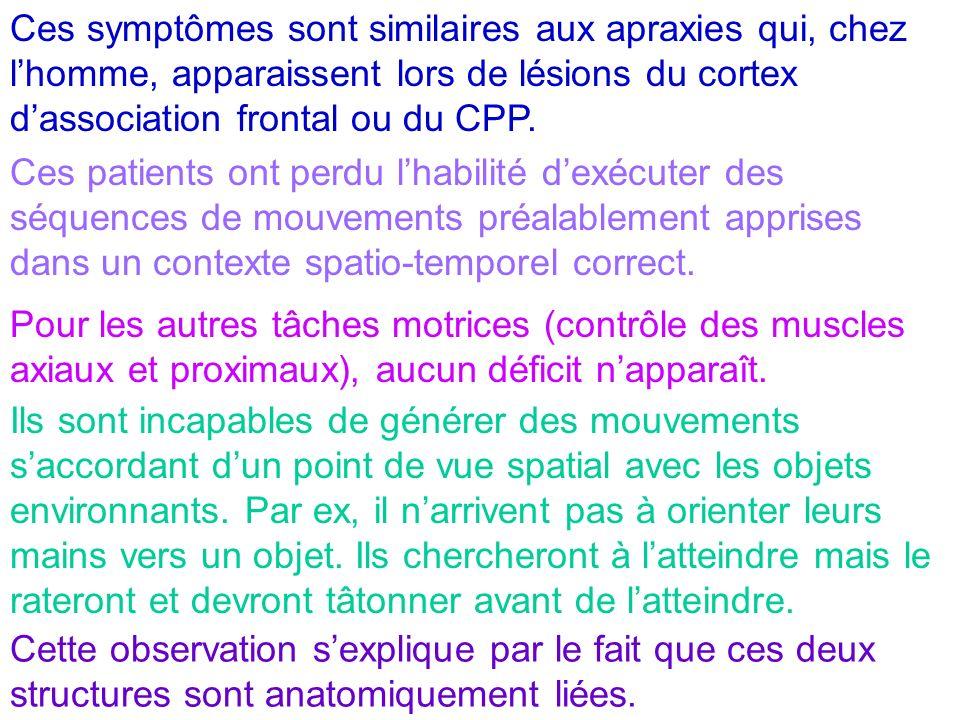 Ces symptômes sont similaires aux apraxies qui, chez l'homme, apparaissent lors de lésions du cortex d'association frontal ou du CPP.