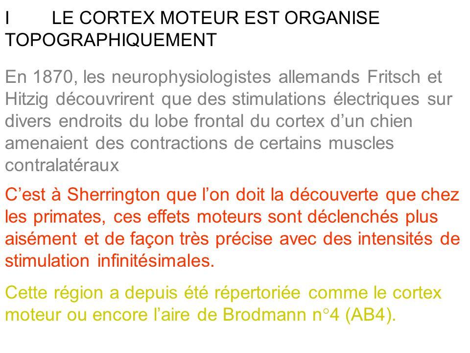 I LE CORTEX MOTEUR EST ORGANISE TOPOGRAPHIQUEMENT