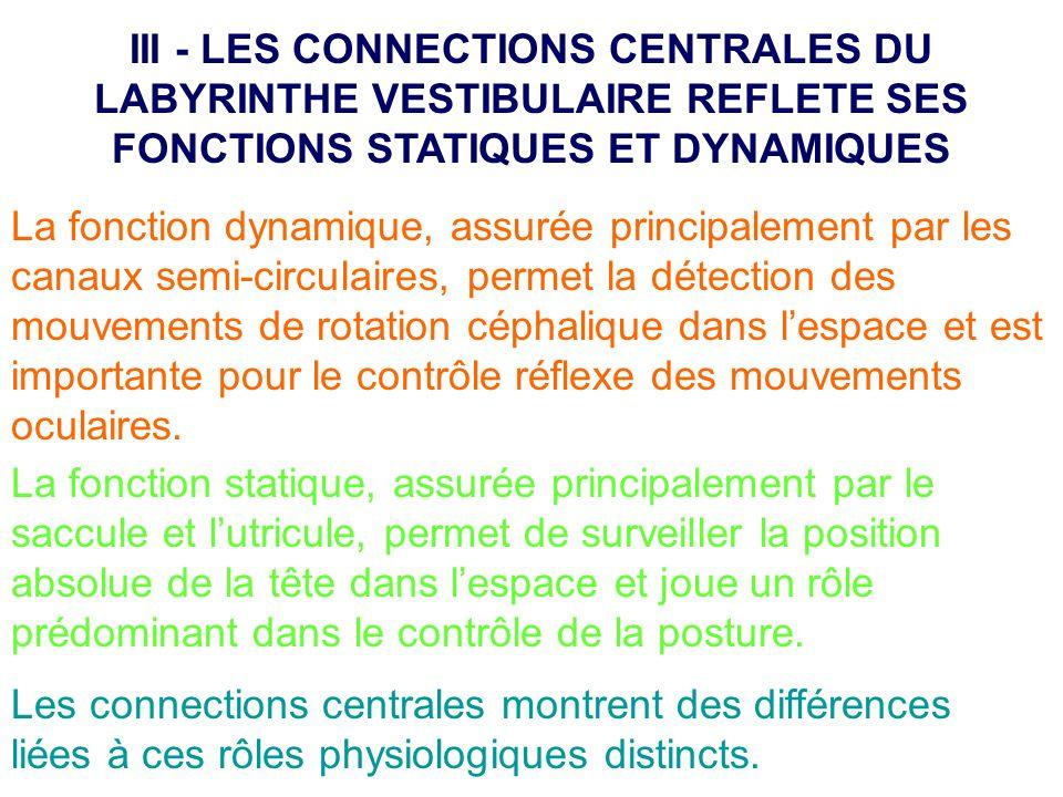 III - LES CONNECTIONS CENTRALES DU LABYRINTHE VESTIBULAIRE REFLETE SES FONCTIONS STATIQUES ET DYNAMIQUES