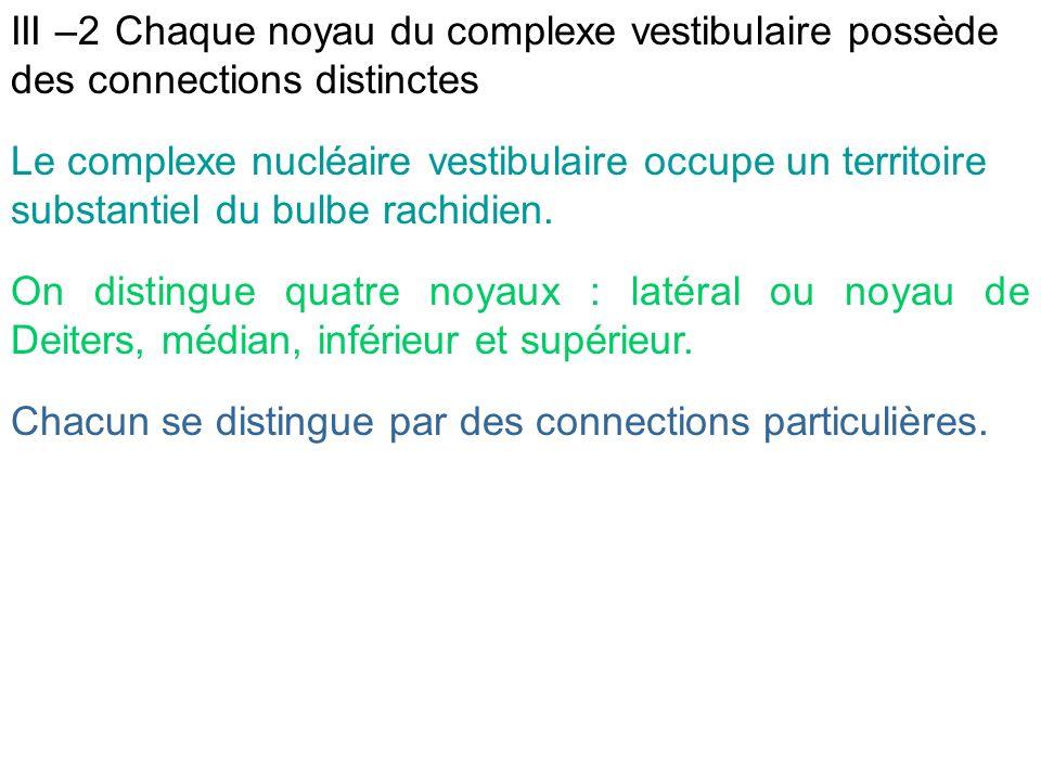 III –2 Chaque noyau du complexe vestibulaire possède des connections distinctes