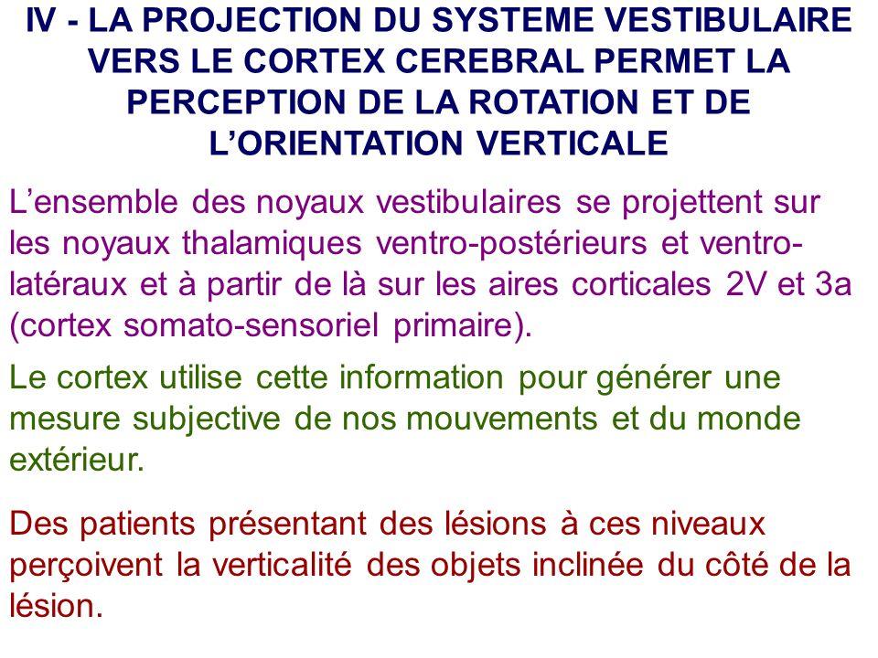 IV - LA PROJECTION DU SYSTEME VESTIBULAIRE VERS LE CORTEX CEREBRAL PERMET LA PERCEPTION DE LA ROTATION ET DE L'ORIENTATION VERTICALE