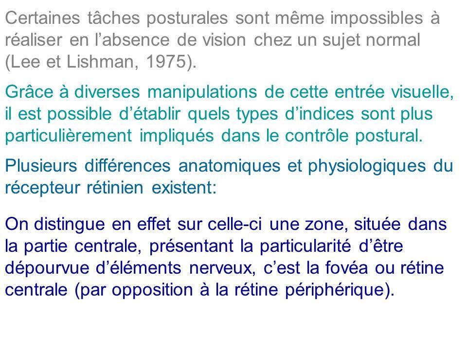 Certaines tâches posturales sont même impossibles à réaliser en l'absence de vision chez un sujet normal (Lee et Lishman, 1975).