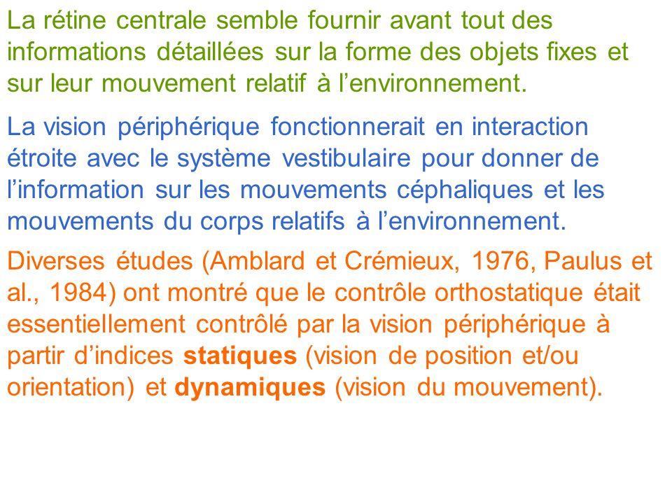 La rétine centrale semble fournir avant tout des informations détaillées sur la forme des objets fixes et sur leur mouvement relatif à l'environnement.