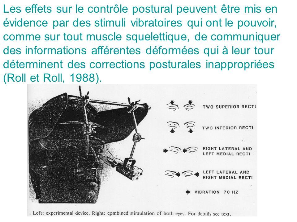 Les effets sur le contrôle postural peuvent être mis en évidence par des stimuli vibratoires qui ont le pouvoir, comme sur tout muscle squelettique, de communiquer des informations afférentes déformées qui à leur tour déterminent des corrections posturales inappropriées (Roll et Roll, 1988).