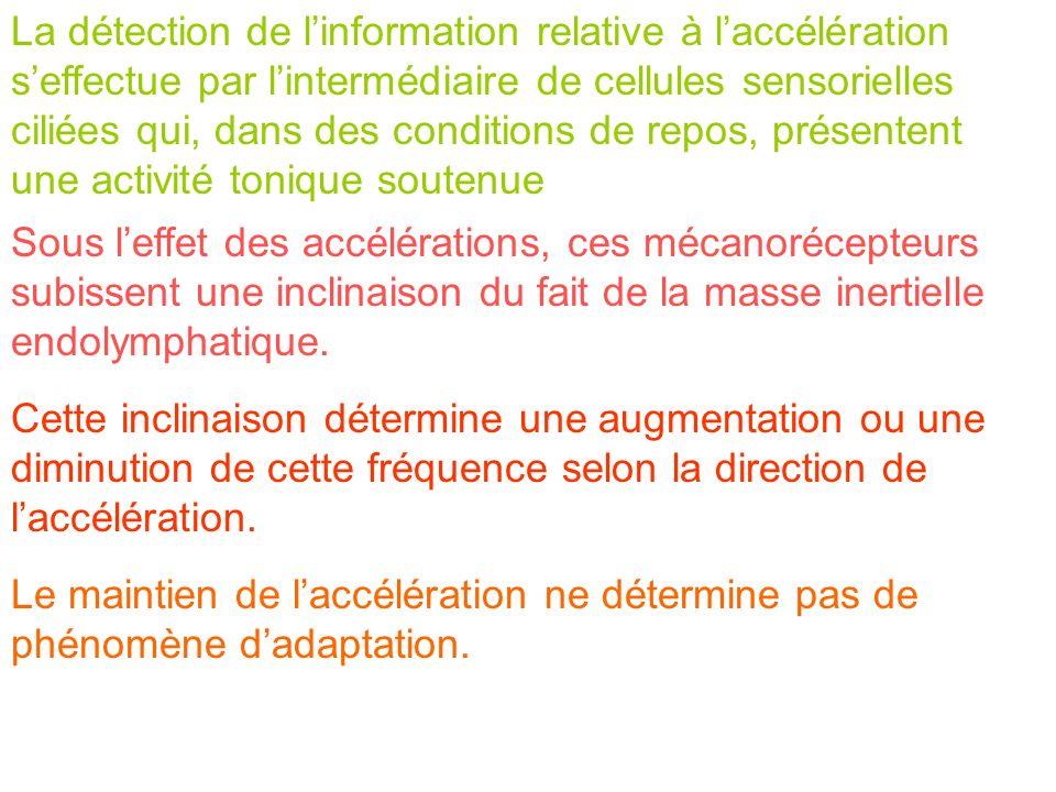 La détection de l'information relative à l'accélération s'effectue par l'intermédiaire de cellules sensorielles ciliées qui, dans des conditions de repos, présentent une activité tonique soutenue