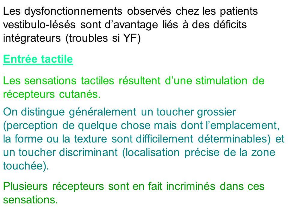 Les dysfonctionnements observés chez les patients vestibulo-lésés sont d'avantage liés à des déficits intégrateurs (troubles si YF)