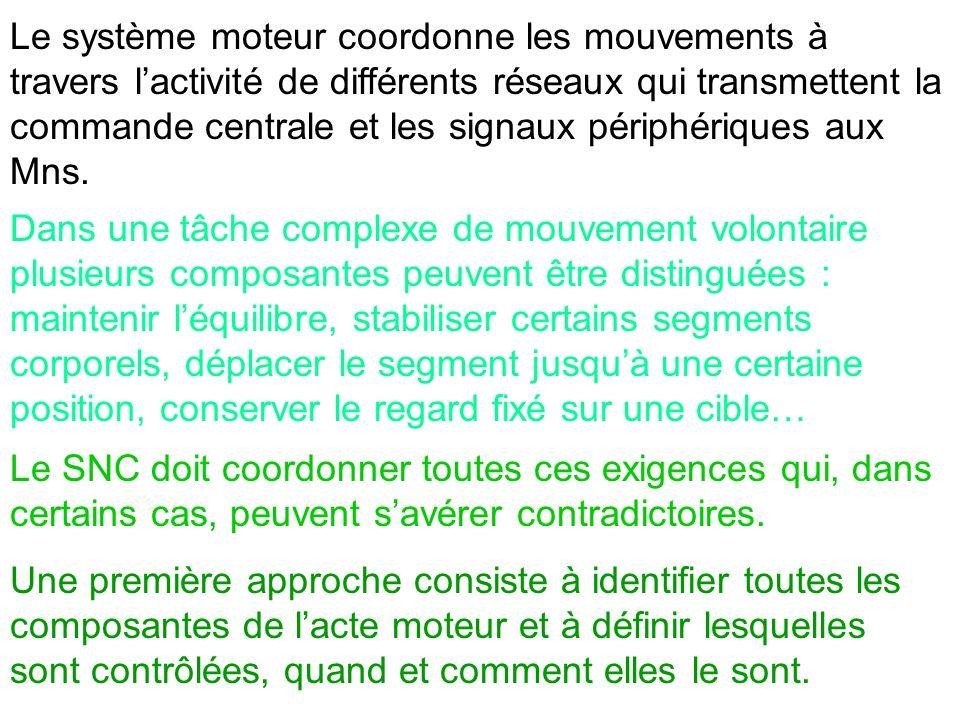 Le système moteur coordonne les mouvements à travers l'activité de différents réseaux qui transmettent la commande centrale et les signaux périphériques aux Mns.