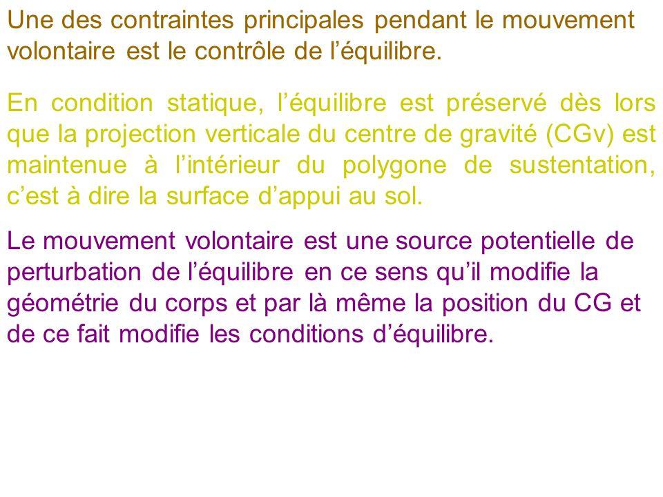 Une des contraintes principales pendant le mouvement volontaire est le contrôle de l'équilibre.