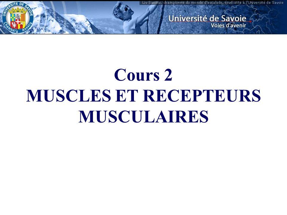 MUSCLES ET RECEPTEURS MUSCULAIRES