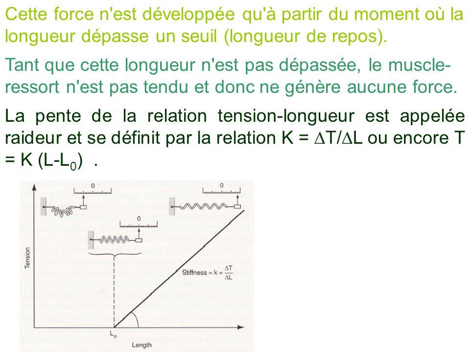 Cette force n est développée qu à partir du moment où la longueur dépasse un seuil (longueur de repos).