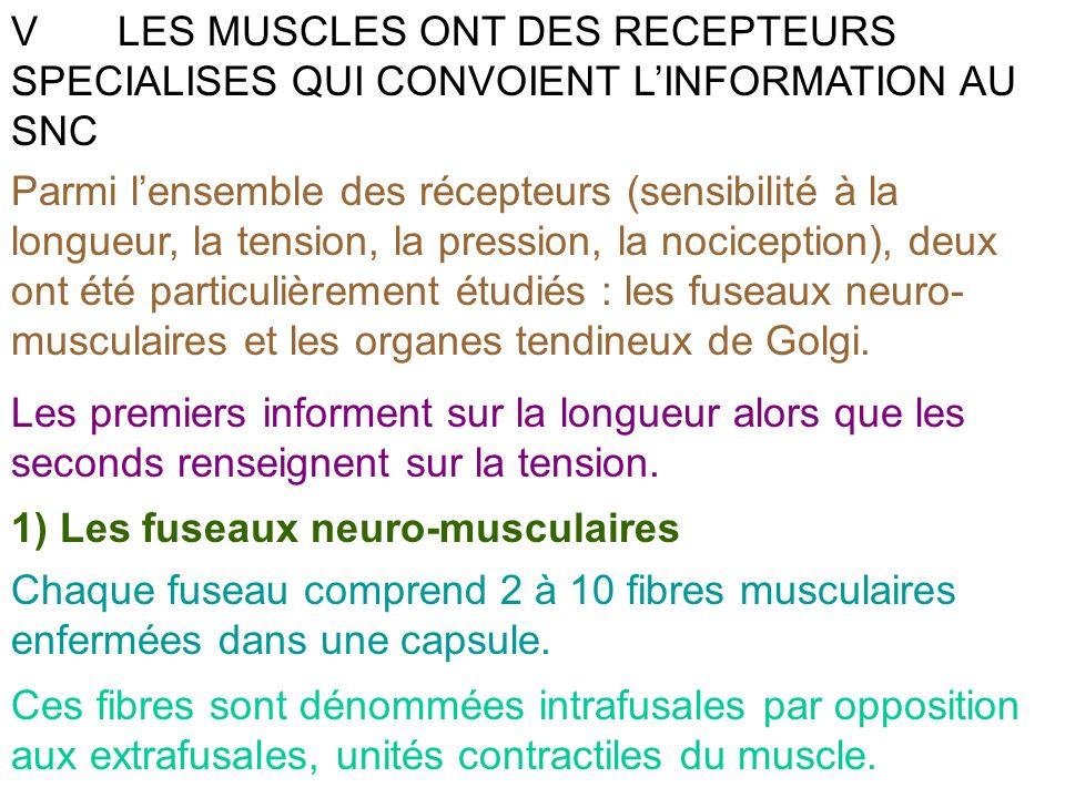 V LES MUSCLES ONT DES RECEPTEURS SPECIALISES QUI CONVOIENT L'INFORMATION AU SNC