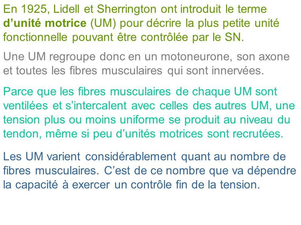 En 1925, Lidell et Sherrington ont introduit le terme d'unité motrice (UM) pour décrire la plus petite unité fonctionnelle pouvant être contrôlée par le SN.