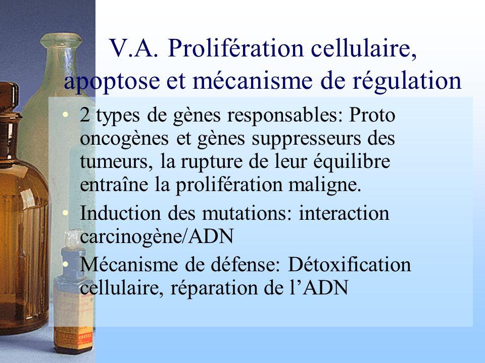 V.A. Prolifération cellulaire, apoptose et mécanisme de régulation