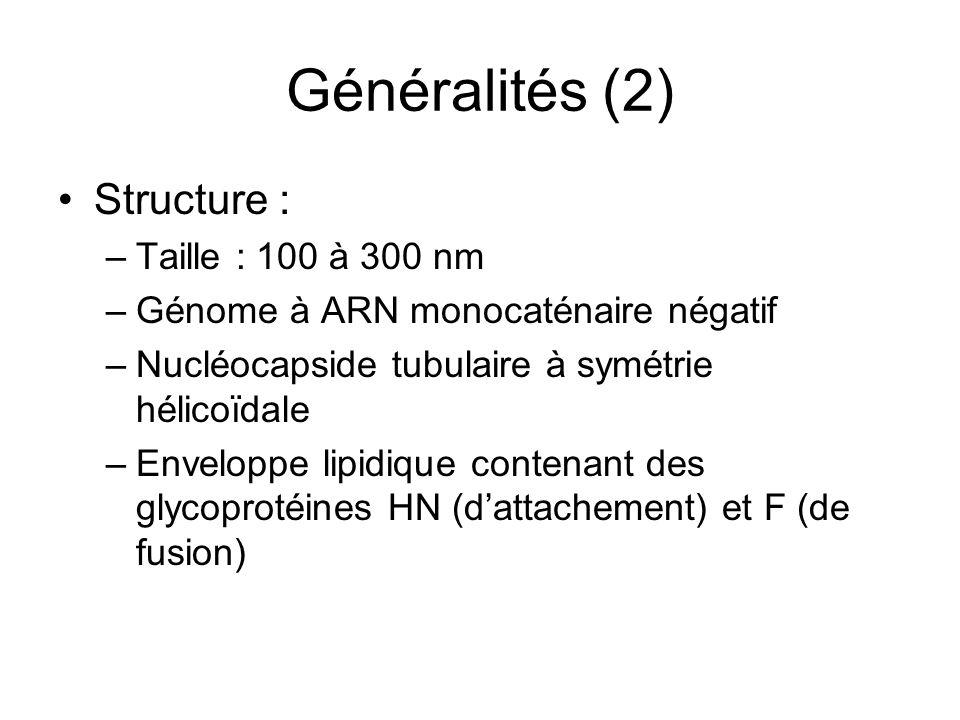 Généralités (2) Structure : Taille : 100 à 300 nm