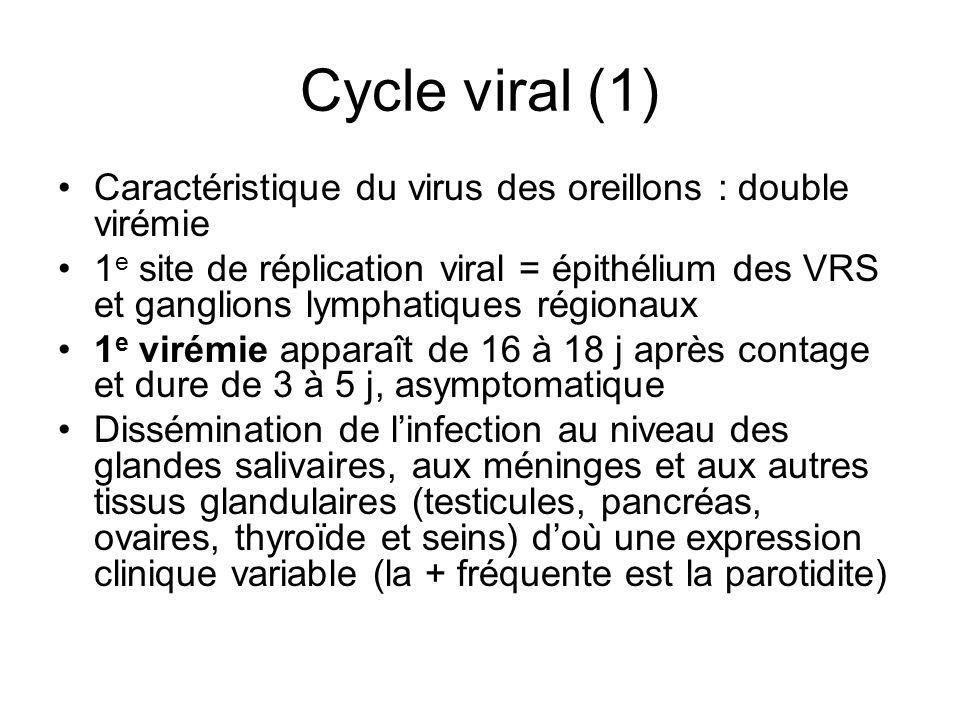 Cycle viral (1) Caractéristique du virus des oreillons : double virémie.