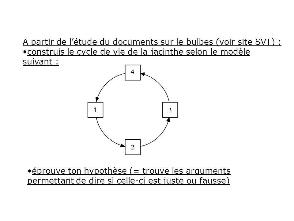 A partir de l'étude du documents sur le bulbes (voir site SVT) :