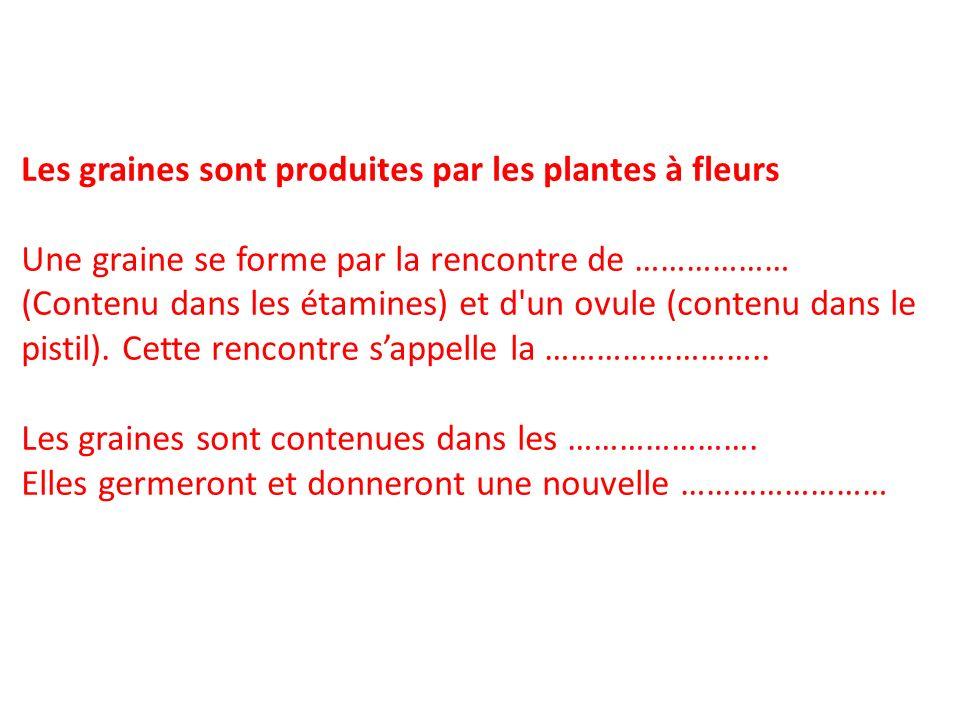 Les graines sont produites par les plantes à fleurs