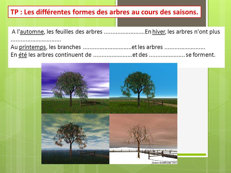 TP : Les différentes formes des arbres au cours des saisons.