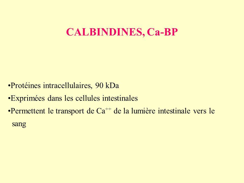CALBINDINES, Ca-BP Protéines intracellulaires, 90 kDa