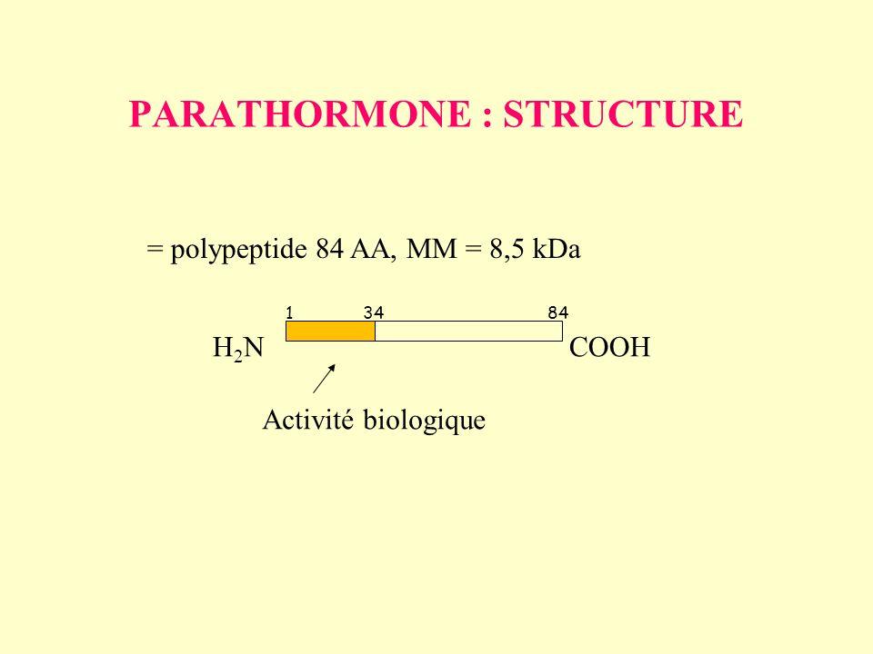 PARATHORMONE : STRUCTURE