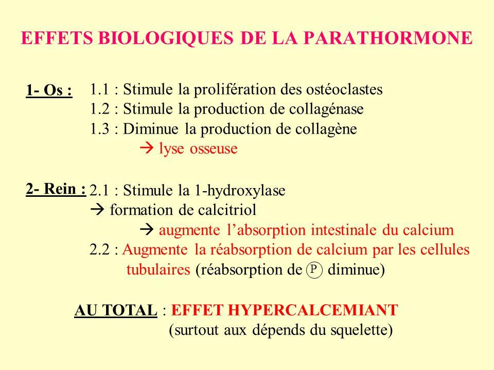 EFFETS BIOLOGIQUES DE LA PARATHORMONE