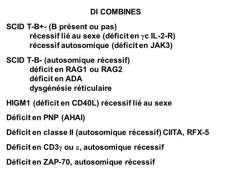 DI COMBINES SCID T-B+- (B présent ou pas) récessif lié au sexe (déficit en gc IL-2-R) récessif autosomique (déficit en JAK3)