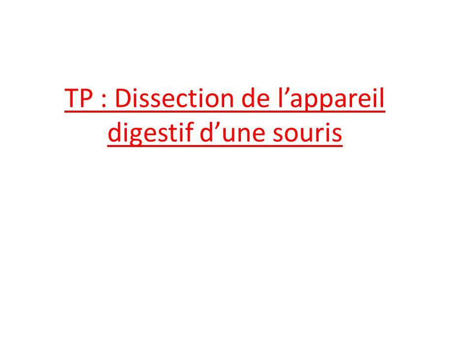 TP : Dissection de l'appareil digestif d'une souris