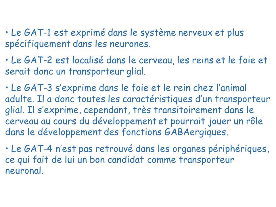 Le GAT-1 est exprimé dans le système nerveux et plus spécifiquement dans les neurones.