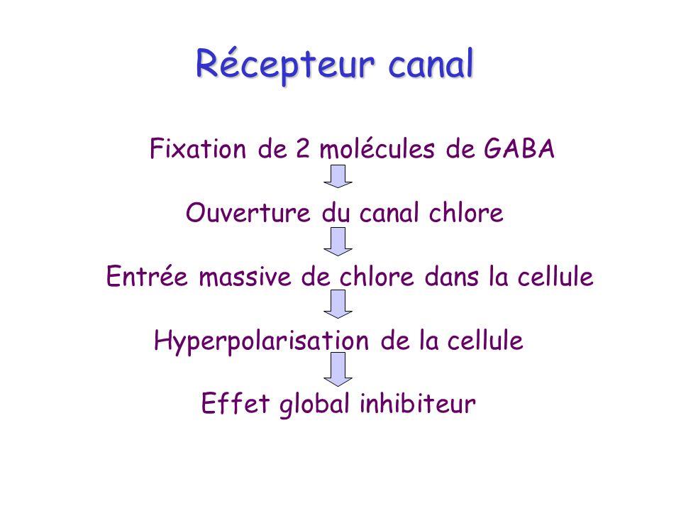 Récepteur canal Fixation de 2 molécules de GABA