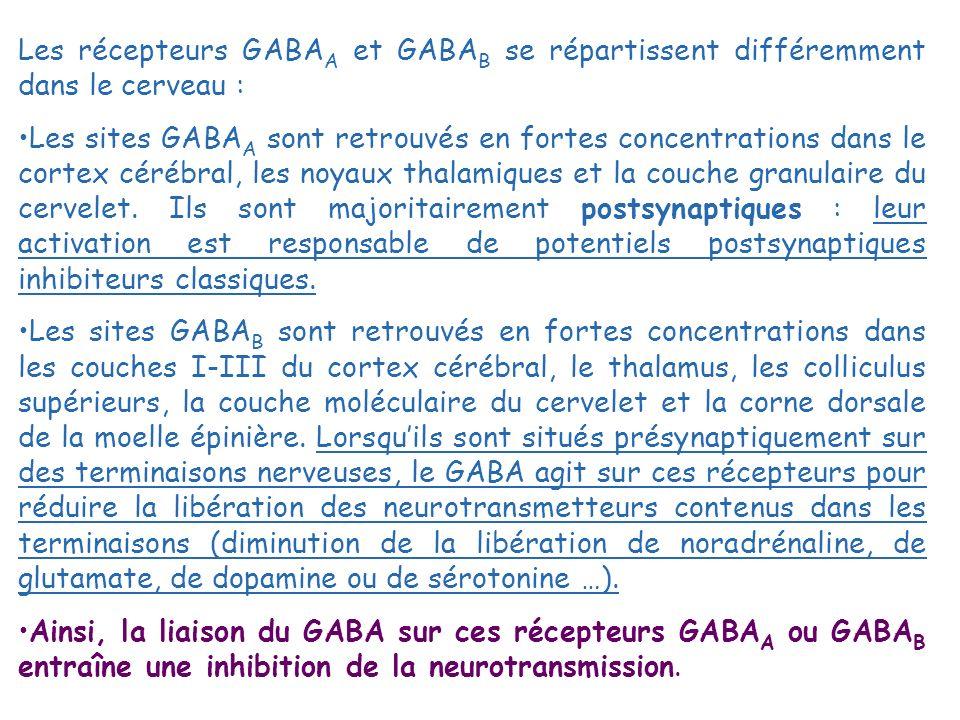 Les récepteurs GABAA et GABAB se répartissent différemment dans le cerveau :