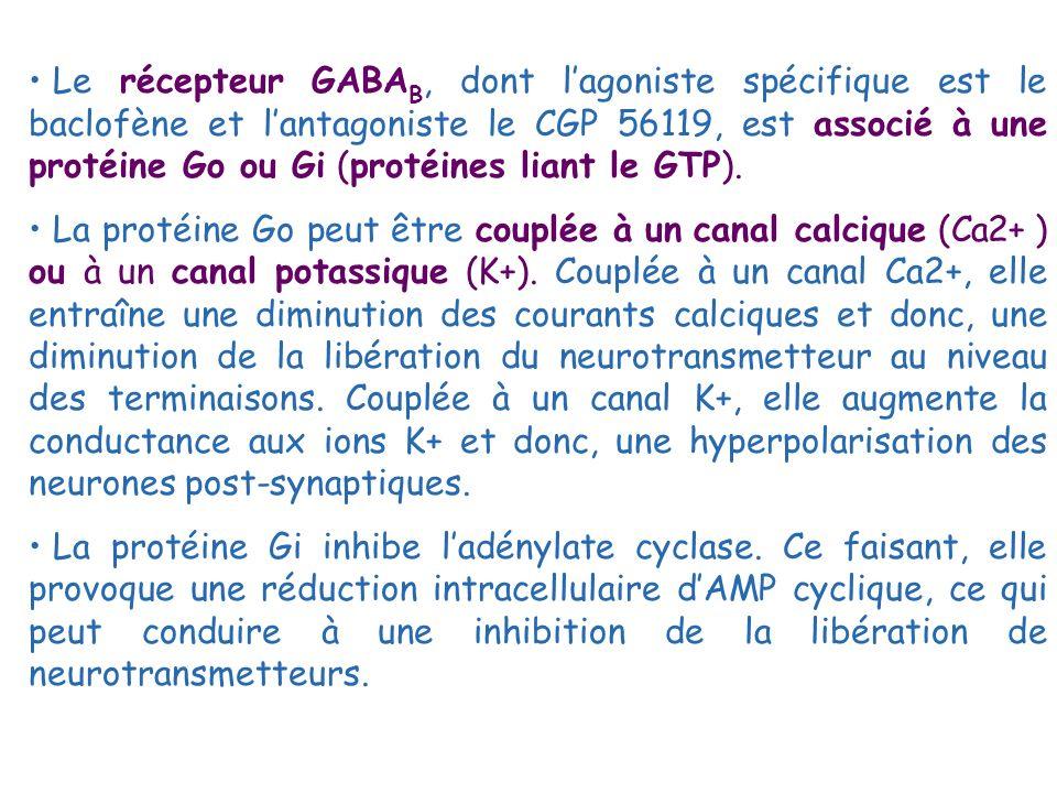 Le récepteur GABAB, dont l'agoniste spécifique est le baclofène et l'antagoniste le CGP 56119, est associé à une protéine Go ou Gi (protéines liant le GTP).