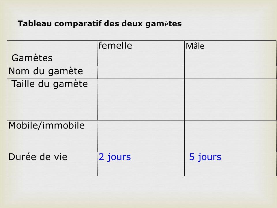Gamètes femelle Mâle Nom du gamète Taille du gamète Mobile/immobile