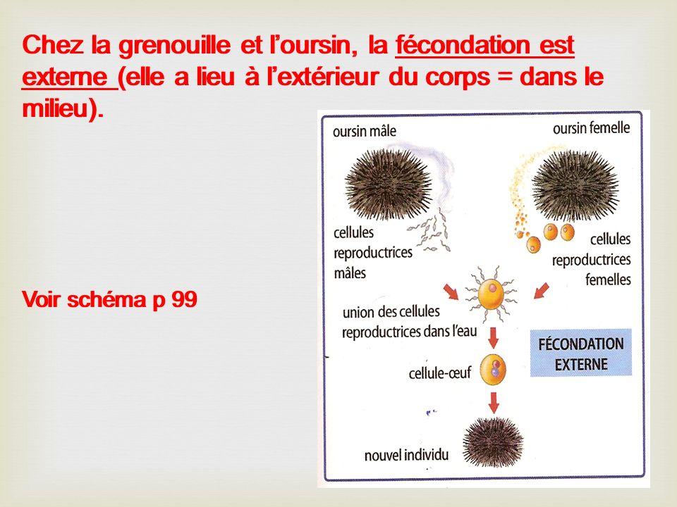 Chez la grenouille et l'oursin, la fécondation est externe (elle a lieu à l'extérieur du corps = dans le milieu).