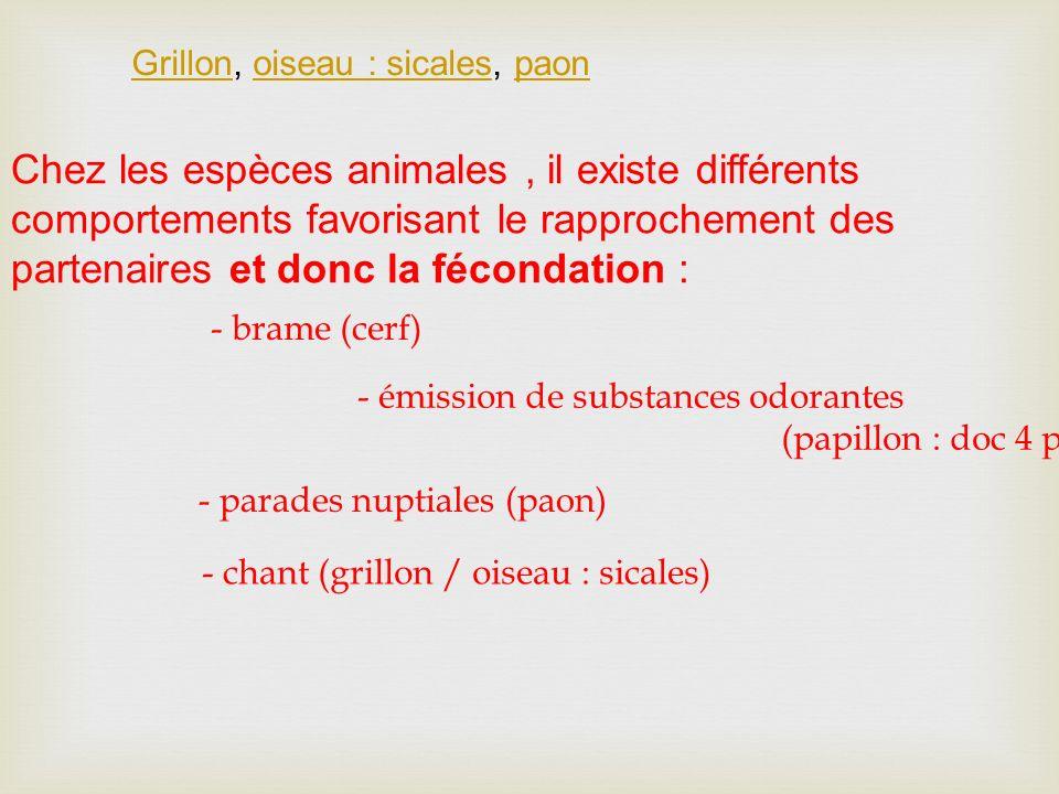 Grillon, oiseau : sicales, paon