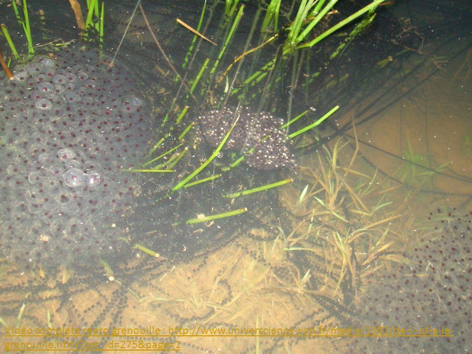 Vidéo complète repro grenouille : http://www. universcience-vod