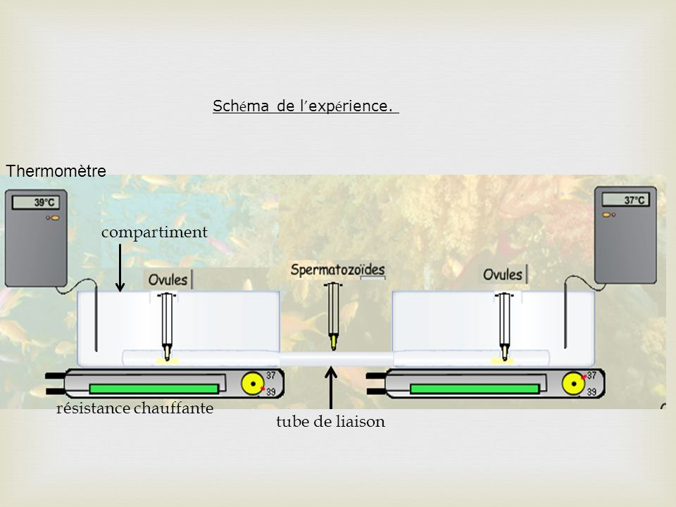 résistance chauffante tube de liaison