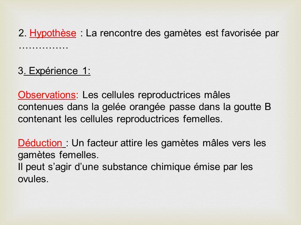 2. Hypothèse : La rencontre des gamètes est favorisée par ……………