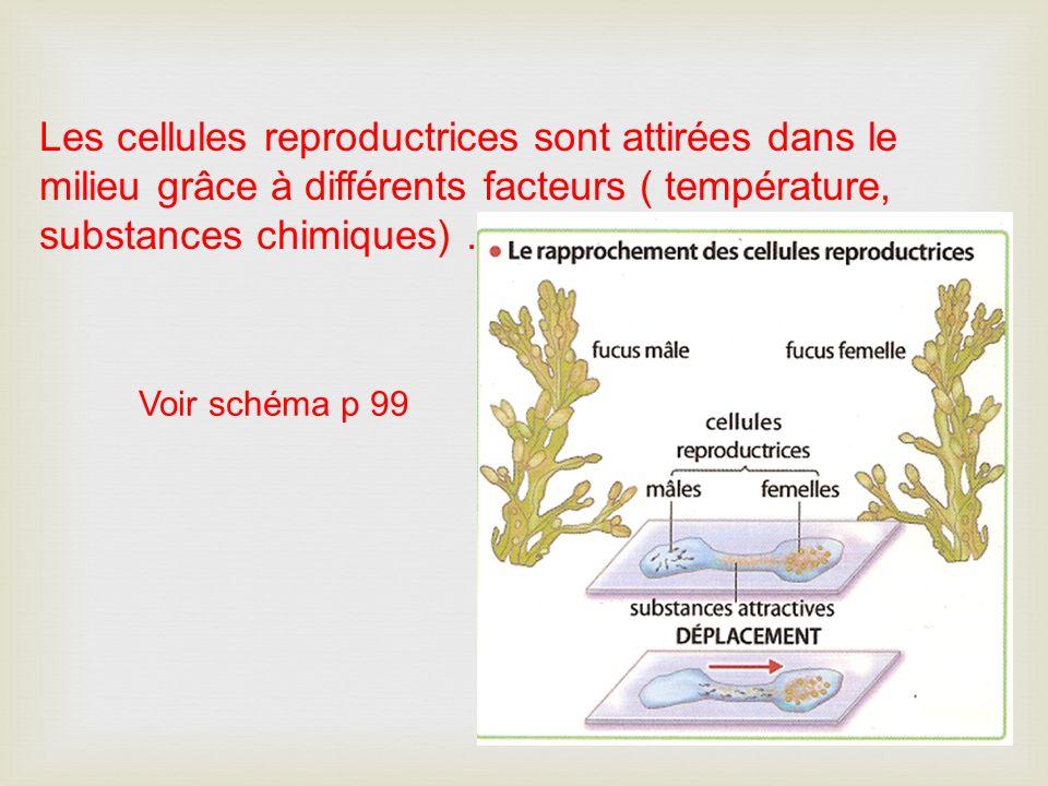 Les cellules reproductrices sont attirées dans le milieu grâce à différents facteurs ( température, substances chimiques) .